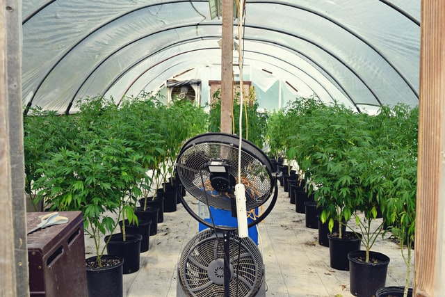 greenhouse-interior-plants-fan
